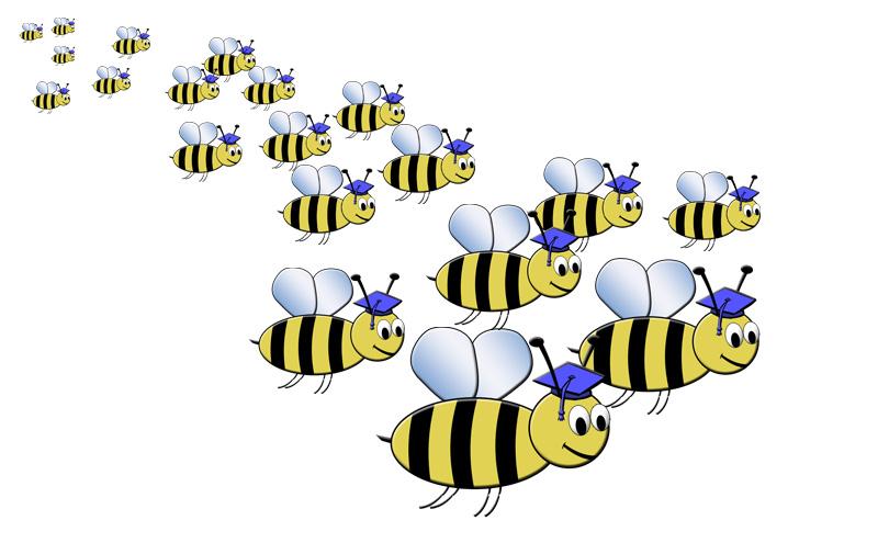 Bees Graduation